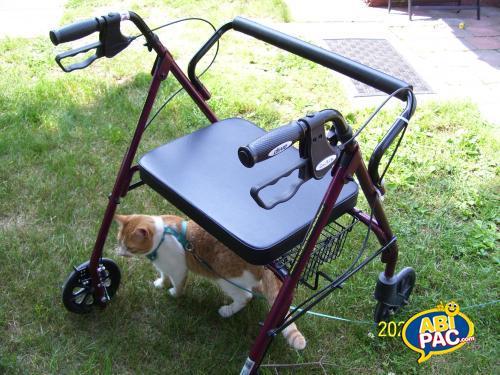 Première photo pour Déambulateur à roues